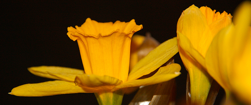 easter-flower